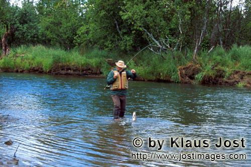 Rainbow trout/Oncorhynchus mykiss        Fisherman at a salmon river