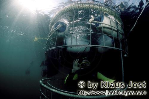 Dyer Island/Western Cape/South Africa        Shark cage with diver unterwater