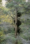 Three little brown bears in safety on the tree