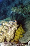 Multicolored feather stars