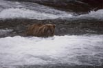 Brown baer below the waterfall
