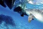 The Tiger Shark and the outboard motor