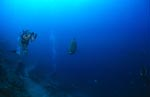 Humphead Wrasse and diver