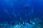 divers wait on sharks