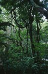 Fiji rainforest atmosphere