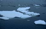 Drifting ice floes on Cape Anne
