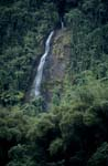 Waterfall surrounded by greenery of the jungle