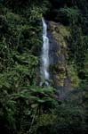 Waterfall in dense Fiji rainforest