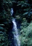 Fascinating waterfall in the Fiji rainforest